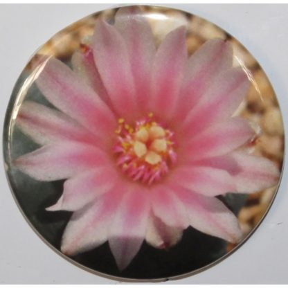 Round peyote bloom magnet