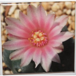 Square Peyote in bloom magnet
